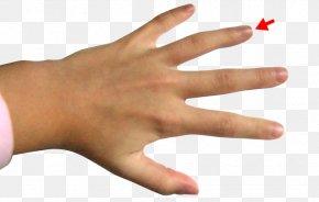 Ring - Ring Finger Middle Finger Index Finger PNG