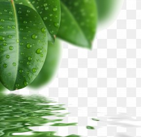 Green Leaves Background Material Picture - Drop Leaf Green PNG