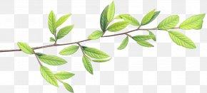 Leaf - Leaf Clip Art PNG