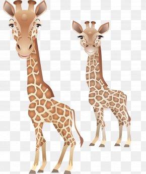 Giraffe - Northern Giraffe Leopard Animal About Giraffes Clip Art PNG