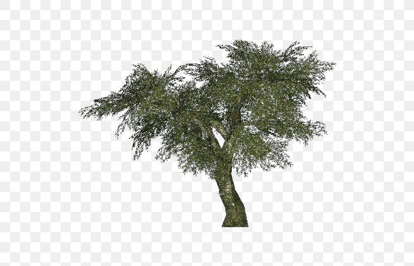 Arecaceae Tree Areca Palm Albizia Julibrissin Bamboo, PNG, 750x527px, Arecaceae, Albizia Julibrissin, Areca Palm, Bamboo, Branch Download Free
