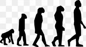 Steps - Human Evolution Homo Sapiens Clip Art PNG
