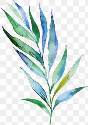 Perennial Plant Herbaceous Plant - Leaf Plant Flower Herbaceous Plant Perennial Plant PNG