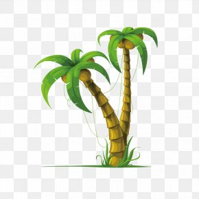 Coconut Tree - Coconut Arecaceae Drawing Stock Photography PNG