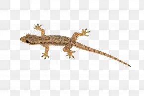 Lizard Transparent Image - Lizard Reptile House Geckos Sauria Blue-tailed Skink PNG
