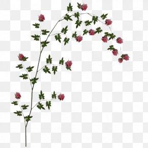 Rose Vine File - Rose Clip Art PNG
