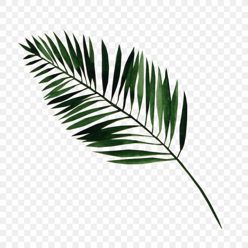 Leaf Watercolor Painting, PNG, 1024x1024px, Leaf, Arecales, Art, Grass, Grass Family Download Free