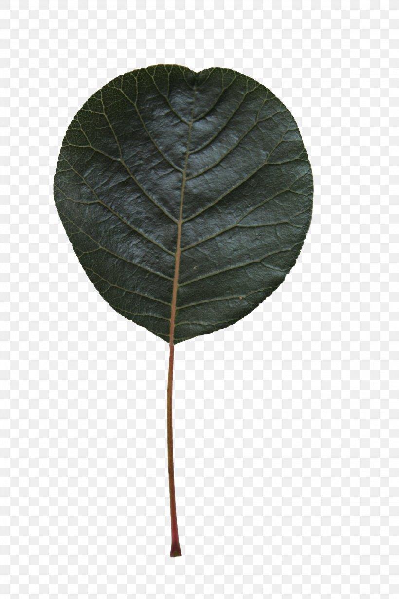 Leaf Green Plant Flower Tree, PNG, 2304x3456px, Leaf, Anthurium, Flower, Green, Plant Download Free