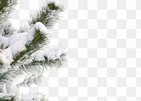 Snow Winter Tree - Snow Winter Tree Shutterstock PNG
