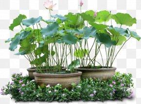 Flower - Flowerpot Crock Poterie En Toscane Houseplant PNG