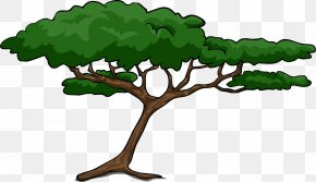 Cartoon Tree - African Trees Wattles Acacia Clip Art PNG