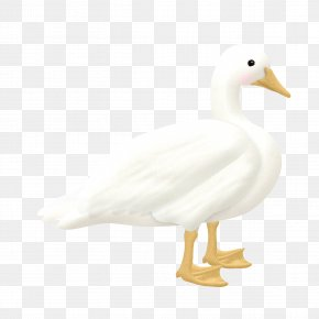 Duck - Duck With Not Bulletproof Goose Cygnini PNG