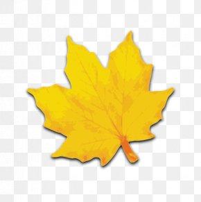 Maple Leaf - Sugar Maple Maple Leaf Yellow Clip Art PNG