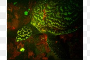 Turtle - Hawksbill Sea Turtle Glow In The Dark Creatures Deep Sea Creature PNG