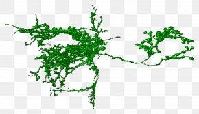 Plant Segmentation Line - Leaf Plant Stem Line Font PNG