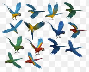 Parrot Images, Free Download - Parrot Bird Download PNG