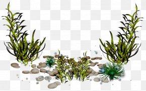 Seaweed - Algae Photography Clip Art PNG
