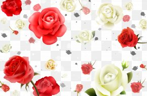 Red And White Roses Background Material - Beach Rose Flower White Petal PNG