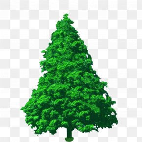 Landscape Tree Art - Spruce Pine Fir Conifers Cypress PNG