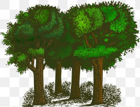 Transparent Tree Cliparts - Tree Forest Clip Art PNG