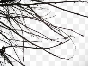 Branch Free Image - Branch PNG