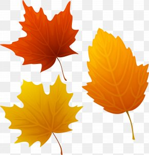 Autumn Leaves Clip Art - Clip Art Image Vector Graphics Free Content PNG