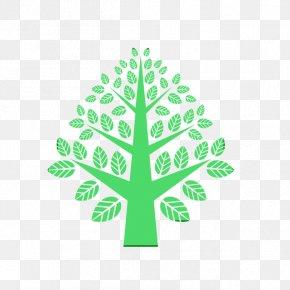 Pine Family Pine - Green Leaf Tree Plant Logo PNG