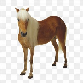 Horse - Horse Certified Public Accountant Veterinarian Accounting Bookkeeping PNG