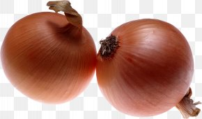 Onion Image - Onion Download Wallpaper PNG