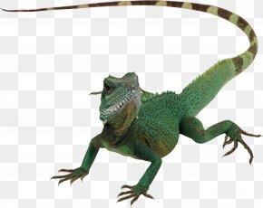 Lizard - Lizard Reptile Chameleons Komodo Dragon PNG