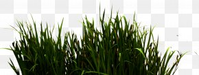 River Grass - Download Icon PNG