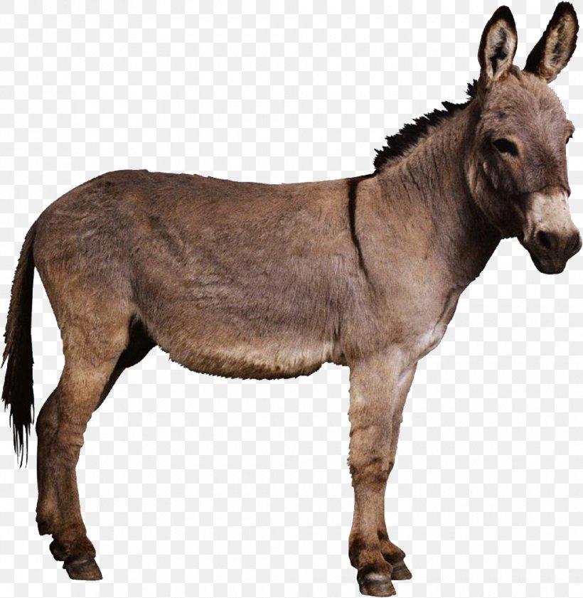 Bethlehem Donkey Foal Colt Palm Sunday, PNG, 980x1006px, Bethlehem, Animal, Blessing, Christianity, Colt Download Free