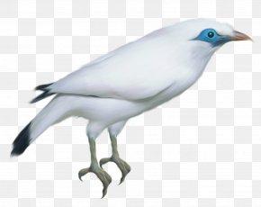 Bird - Beak Feather Wing Fauna PNG