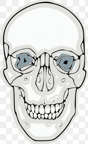 Anatomy Vector - Skull And Crossbones Clip Art PNG