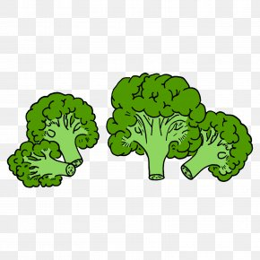 Green Cauliflower - Broccoli Vegetable PNG