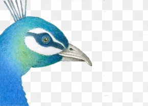 Blue Peacock PNG