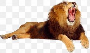 Lion - Lion Roar Cat PNG
