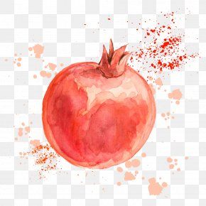 Vector Drawing Pomegranate - Pomegranate Drawing Fruit Illustration PNG