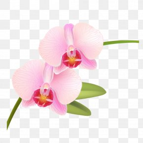 Light Pink - Orchids Pink Rose Phalaenopsis Equestris Vector Graphics PNG
