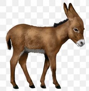 Donkey - Howrse Gypsy Horse Hanoverian Horse Shetland Pony Connemara Pony PNG