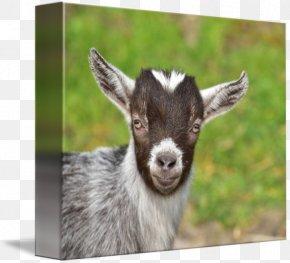 Goat - Goat Livestock Farm Herd Agriculture PNG