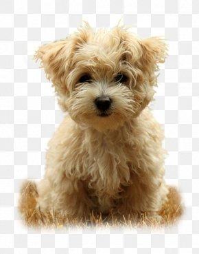Puppy - Puppy Rottweiler Desktop Wallpaper Beagle Cuteness PNG