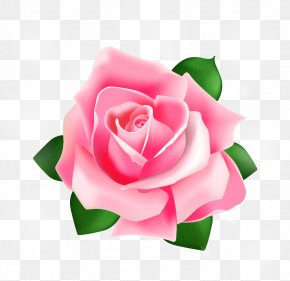 Rose Vector - Rose Pink PNG