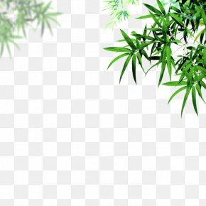 Bamboo - Bamboo Leaf Portable Document Format Chrysanthemum PNG