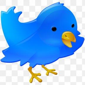 Blue Bird - Professional Web Design Web Development Social Media Web Button PNG