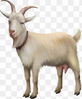 Vector Kawaii Goat - Rove Goat Sheep Stock Photography Stock Illustration PNG