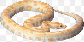 Snake Image Picture Download - Snake Reptile PNG