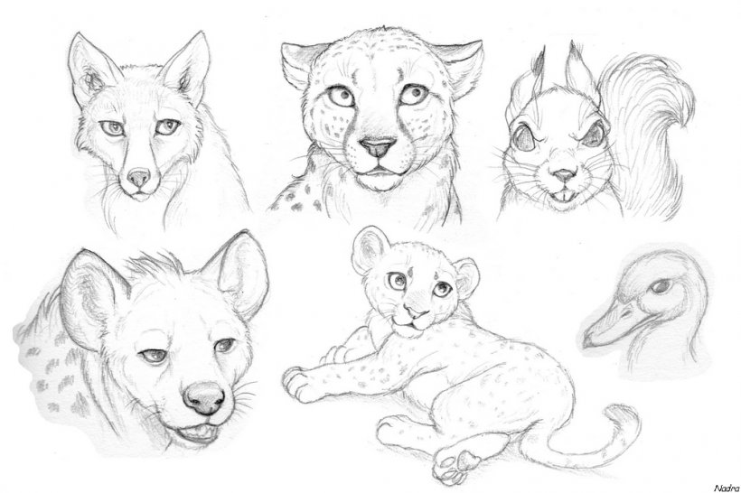 Drawing Lion Pencil Sketch Png 1000x666px Drawing Animal