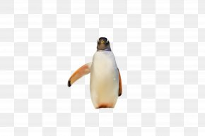 Beak Gentoo Penguin - Penguin PNG