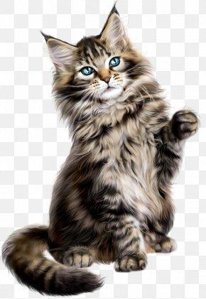 Kitten - Asian Semi-longhair Siberian Cat Maine Coon Norwegian Forest Cat Kitten PNG